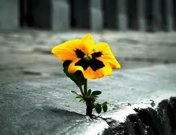 resilience pic